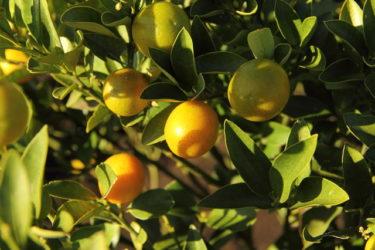『生』の食物と酵素で病気が治る